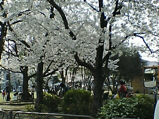 image/niablog-2006-04-01T23:06:13-1.jpg